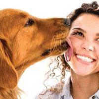 Investigacion Tener un perro reduce el riesgo de sufrir enfermedades cardiovasculares 550x300