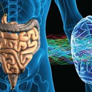 Médico Especialista, El cerebro intestinal es un auténtico centro de elaboración de información
