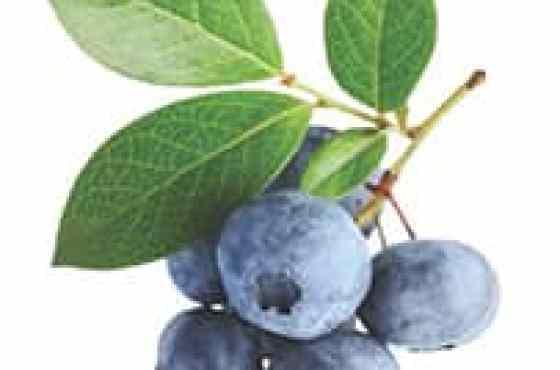 10 Beneficios de los Arándanos Azules