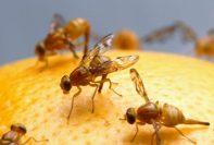 Remedios caseros para deshacerse de las moscas