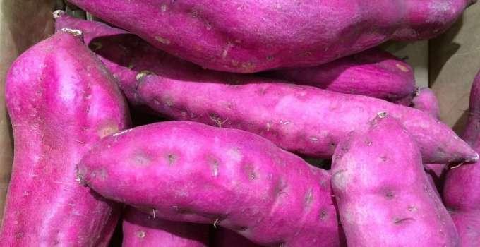 Patata Morada Dulce - Propiedades Estudio Científico