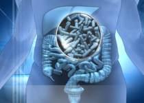Beneficios de los alimentos probióticos