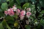 Beneficios y Efectos de la Ayahuasca para la Salud