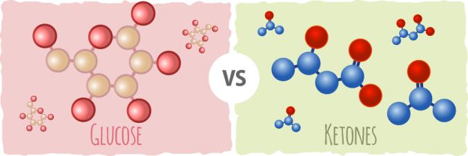 Cetonas vs azucar como energía