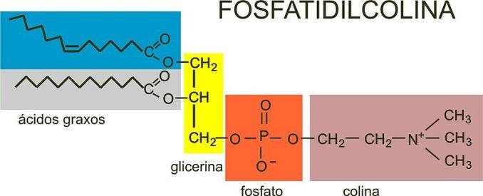 Resultado de imagen para FOSFATIDILCOLINA