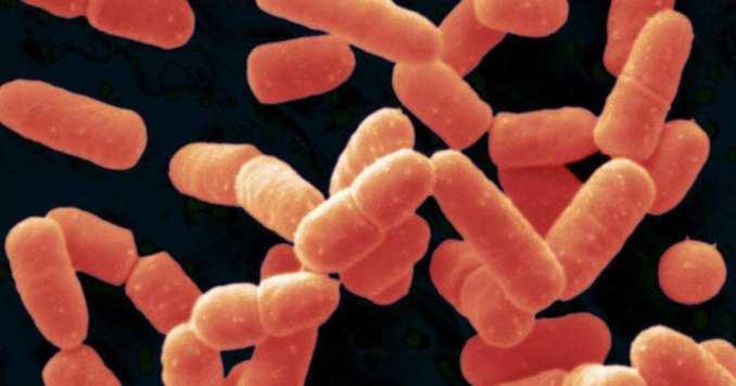Beneficios del Bacillus coagulans para la salud.