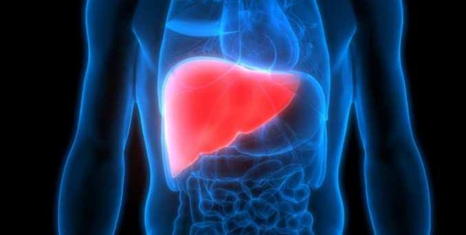 Hígado Hepático