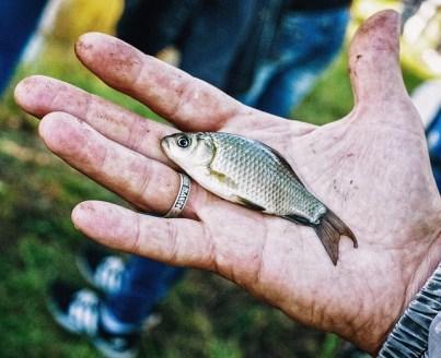 Три тонны мертвой рыбы cобрали на Сене после пожара на водопроводной станции