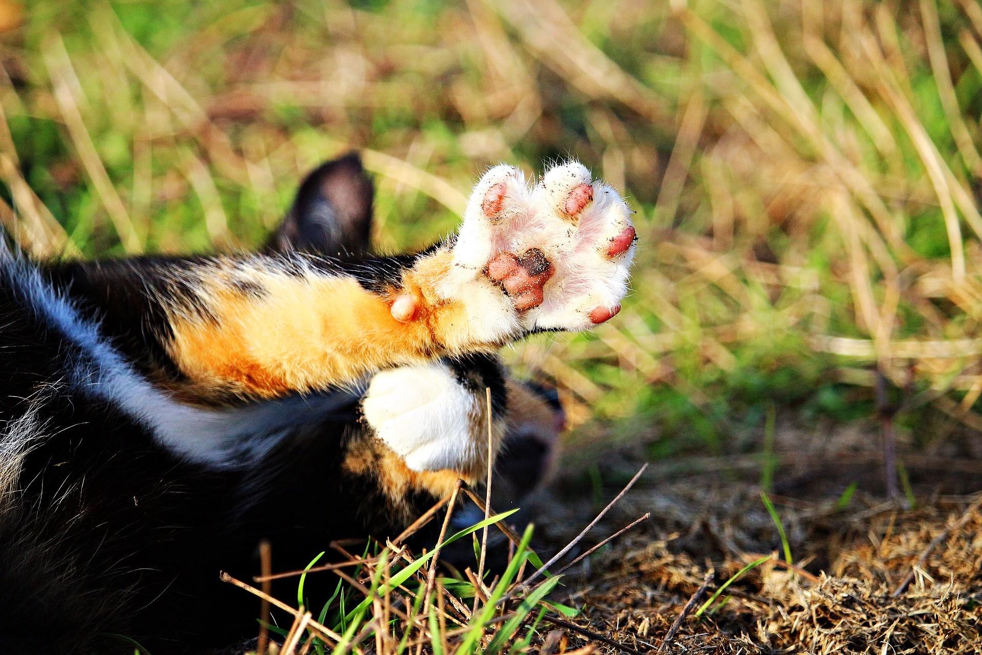 Кот Пепиль, зараженный Covid 19, выздоровел.