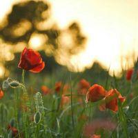 15 Redenen om naar Puglia te vertrekken