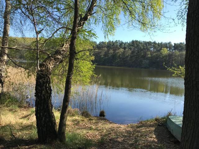 A picture of a lake, with trees and the water
