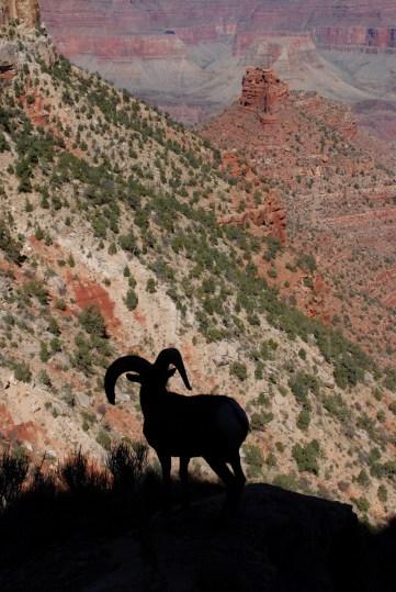Vistas del Grand Canyon