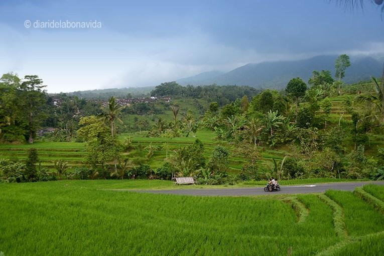 Arrozales de Bali