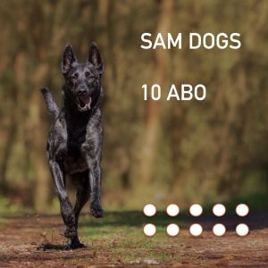 Ssam-dogs - search and mantrailing - hundeschule