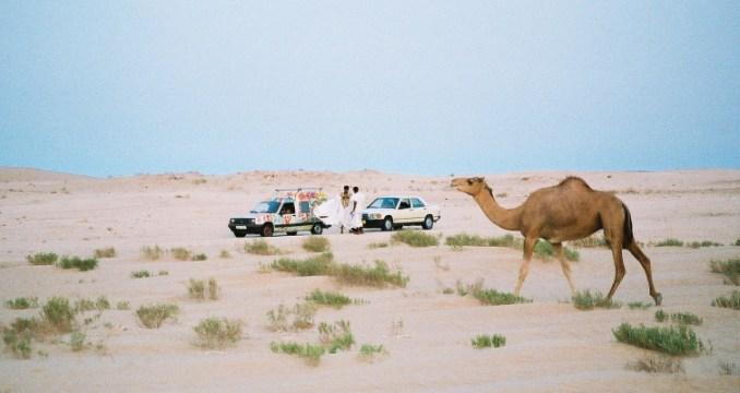 Titine dans le désert mauritanien