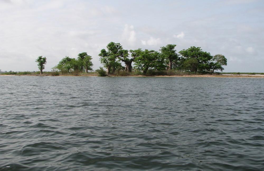 L'île aux baobabs
