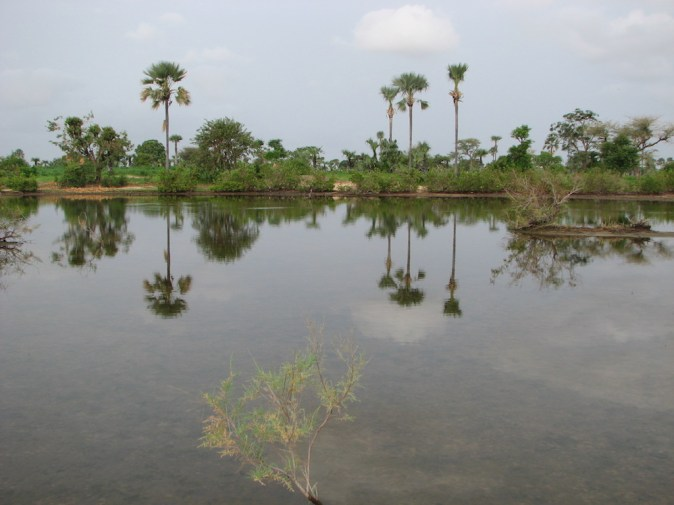 Marigot du Saloum