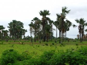Verte Casamance