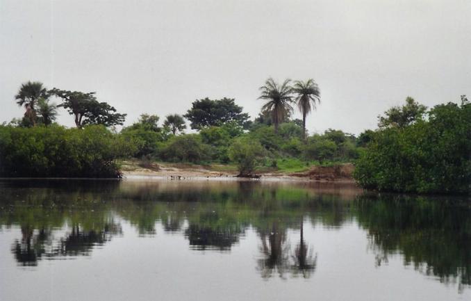 Dans les bolongs du Saloum