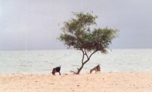 La plage de Djiffer