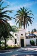 espagne-26-tarifa-palmiers