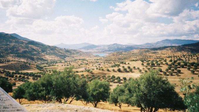 Champs d'oliviers dans les plaines du Rif après Taounate