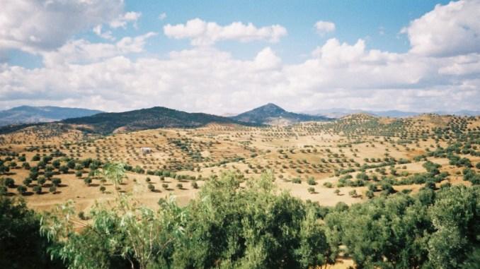 Plaines et champs d'oliviers au milieu des montagnes du Rif
