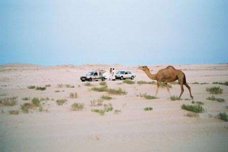Philou,Titine et un dromadaire dans le désert mauritanien