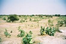 Sud de la Mauritanie