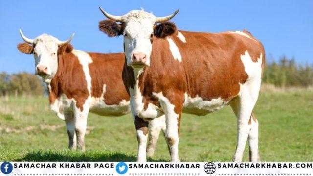 World Milk Day 2021 best cow milk