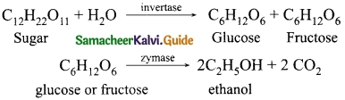 Samacheer Kalvi 10th Science Guide Chapter 11 Carbon and its Compounds 7