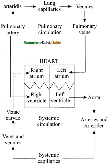 Samacheer Kalvi 10th Science Guide Chapter 14 Transportation in Plants and Circulation in Animals 8