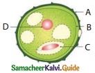 Samacheer Kalvi 10th Science Guide Chapter 17 Reproduction in Plants and Animals 4