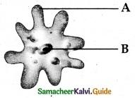 Samacheer Kalvi 6th Science Guide Term 1 Chapter 5 Living World of Animals 2