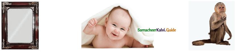 Samacheer Kalvi 4th Tamil Guide Chapter 24 மலையும் எதிரொலியும் 6