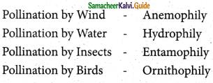 Samacheer Kalvi 5th Science Guide Term 2 Chapter 3 Plants 5