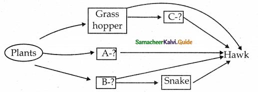 Samacheer Kalvi 12th Bio Botany Guide Chapter 7 Ecosystem 11