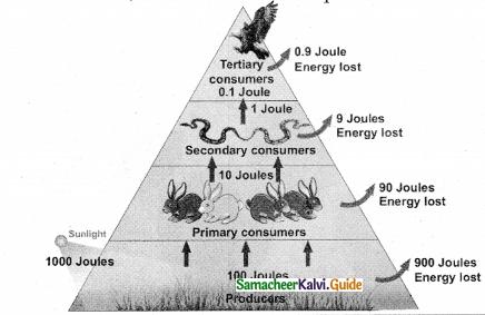 Samacheer Kalvi 12th Bio Botany Guide Chapter 7 Ecosystem 15