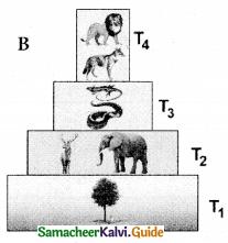 Samacheer Kalvi 12th Bio Botany Guide Chapter 7 Ecosystem 7