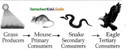 Samacheer Kalvi 12th Bio Botany Guide Chapter 7 Ecosystem 9