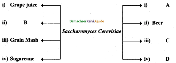Samacheer Kalvi 12th Bio Zoology Guide Chapter 8 Microbes in Human Welfare 2