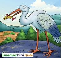 Samacheer Kalvi 4th English Guide Term 3 Supplementary 3 The Magic pencil 10