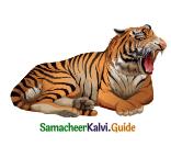 Samacheer Kalvi 4th English Guide Term 3 Supplementary 3 The Magic pencil 7