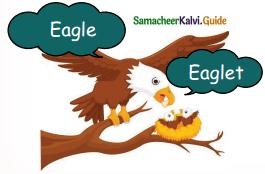 Samacheer Kalvi 5th English Guide Term 3 Prose Chapter 3 The Monster Tree 6