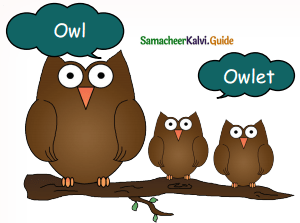 Samacheer Kalvi 5th English Guide Term 3 Prose Chapter 3 The Monster Tree 8