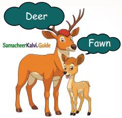Samacheer Kalvi 5th English Guide Term 3 Prose Chapter 3 The Monster Tree 9