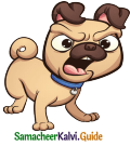 Samacheer Kalvi 5th English Guide Term 3 poem 1 Why Questions 21