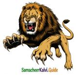 Samacheer Kalvi 5th English Guide Term 3 poem 1 Why Questions 24