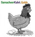 Samacheer Kalvi 5th English Guide Term 3 poem 2 The Dreamer 12