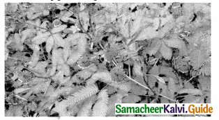 Samacheer Kalvi 9th Science Guide Chapter 19 Plant Physiology 6